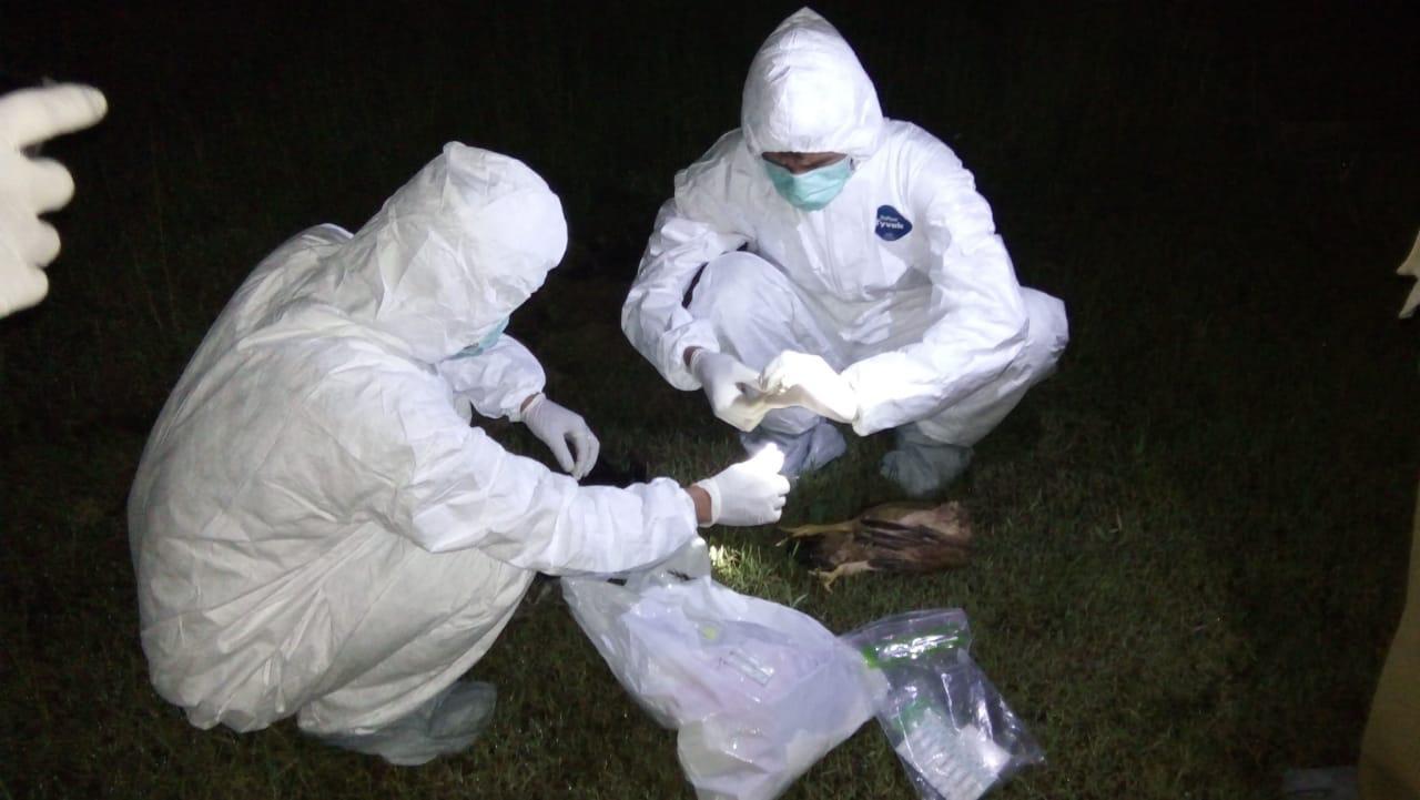 tim dari Bidang Peternakan dan Kesehatan Hewan Dinas Pertanian Kabupaten Bekasi saat mengevakuasi kematian sejumlah hewan ternak, Selasa (3/3/3030) malam. Foto: Istimewa